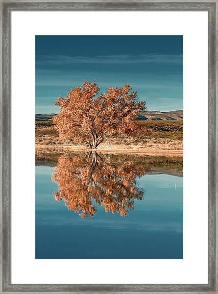 Cotton Wood Tree  Framed Print
