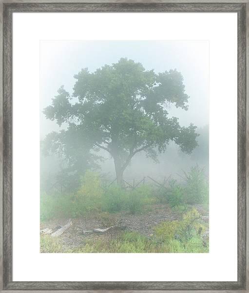 Cottonwood Tree In Fog Framed Print