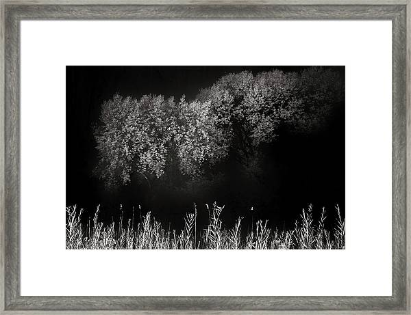 Cottonwoods And Grasses Framed Print by Joseph Smith