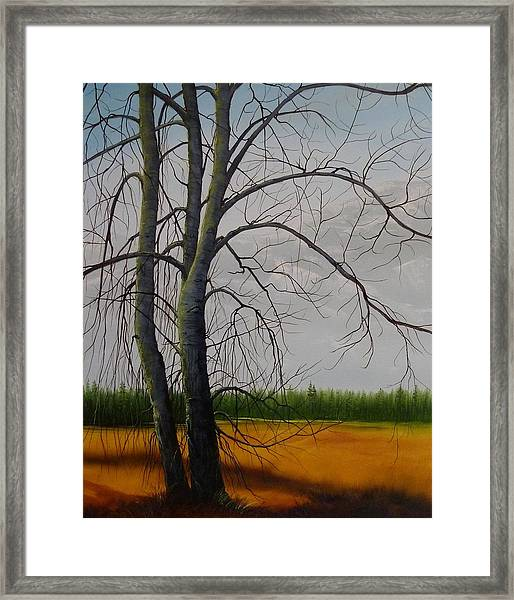 Cottonwoods Framed Print