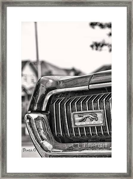 Cougar 1 Framed Print