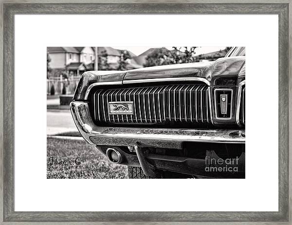 Cougar End Framed Print