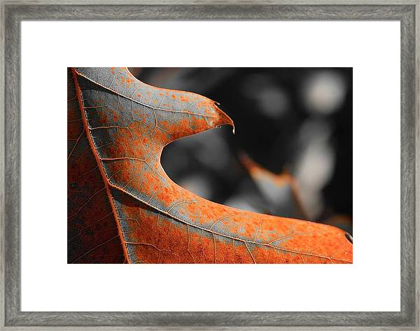 Cougar Rusty Leaf Detail Framed Print
