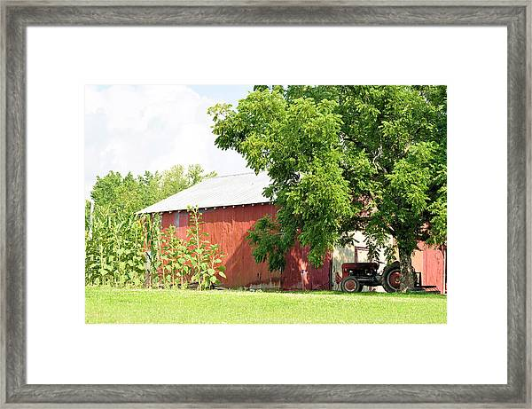 Country Life Framed Print by Jan Amiss Photography