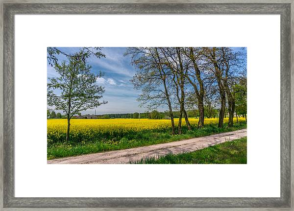 Country Road In The Rapeseed Field Framed Print