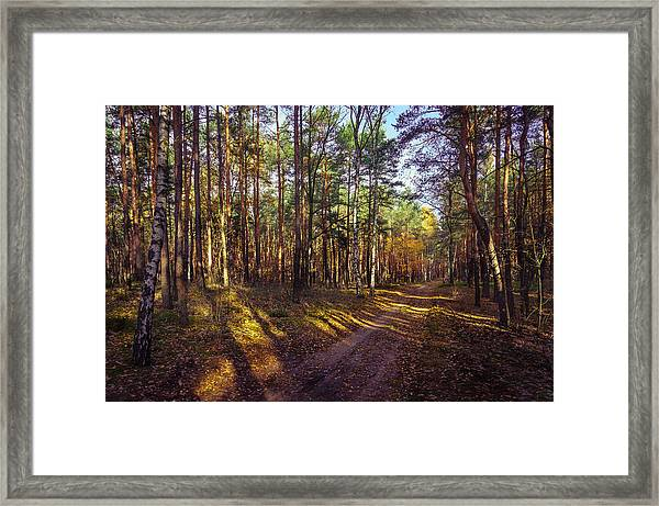 Country Road Through The Forest Framed Print