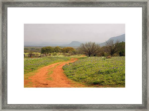 Country Road With Wild Flowers Framed Print