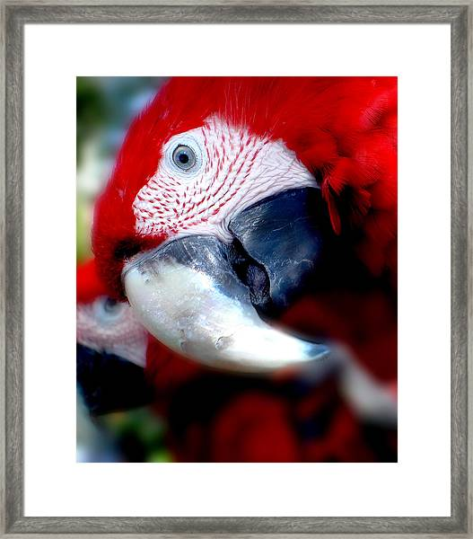 Courious Framed Print