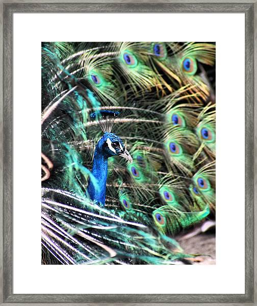 Courtship Dance Framed Print
