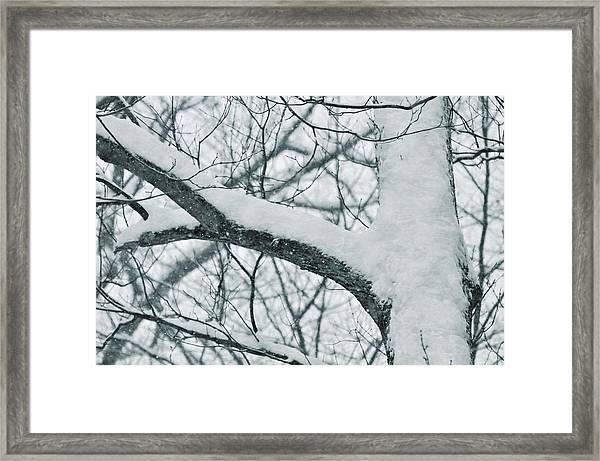 Covered In White Framed Print by JAMART Photography
