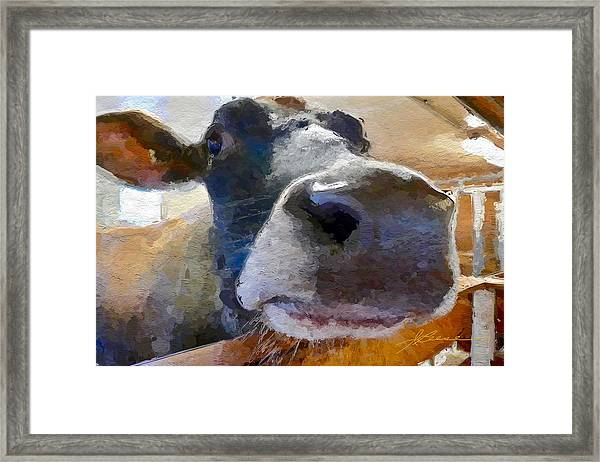 Cow Face Close Up Framed Print