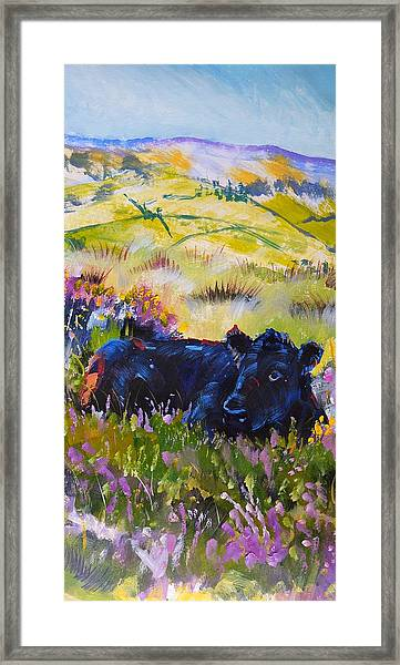 Cow Lying Down Among Plants Framed Print