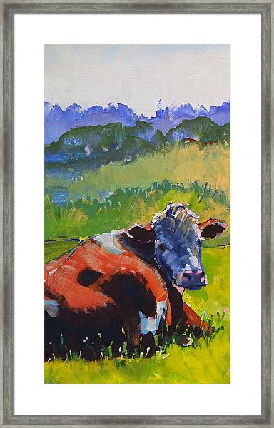 Cow Lying Down On A Sunny Day Framed Print