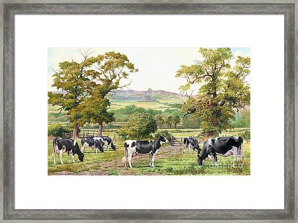 Cows In Castle Meadows Framed Print