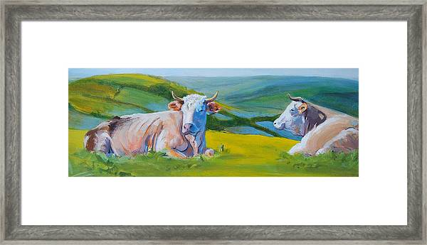 Cows Lying Down In Devon Hills Framed Print