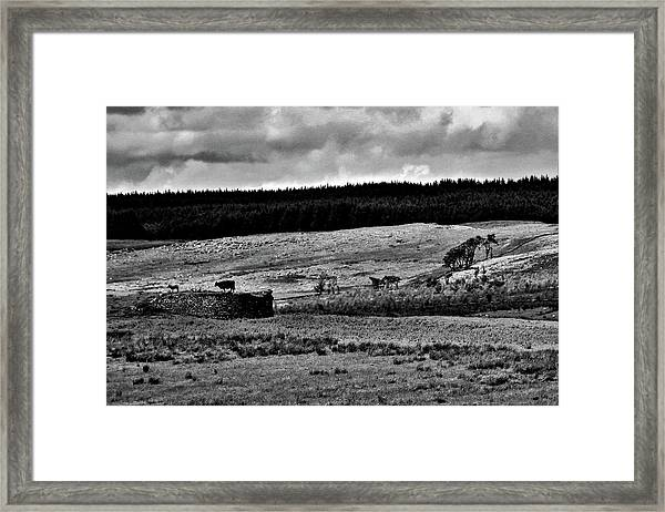 Cows On A Wall Framed Print