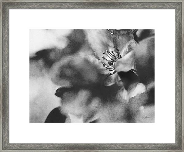 Crab Apple Blossoms Framed Print