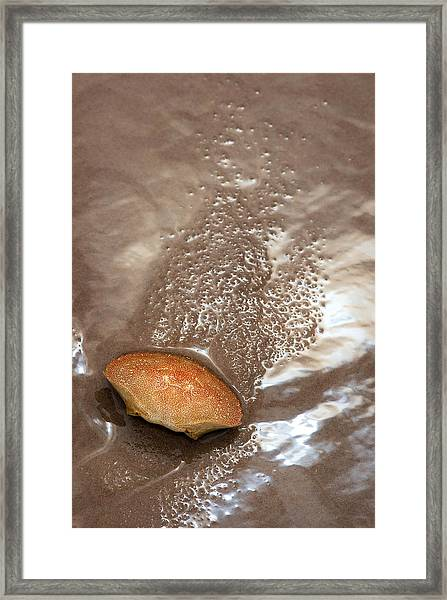 Crab Shell On Beach Framed Print