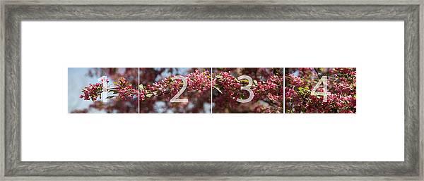 Crabapple In Spring Panoramic Map Framed Print