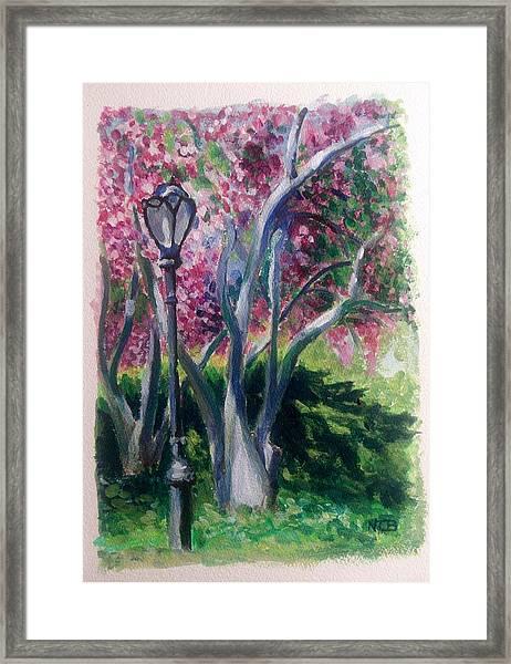 Crabapple Spring Burst Framed Print