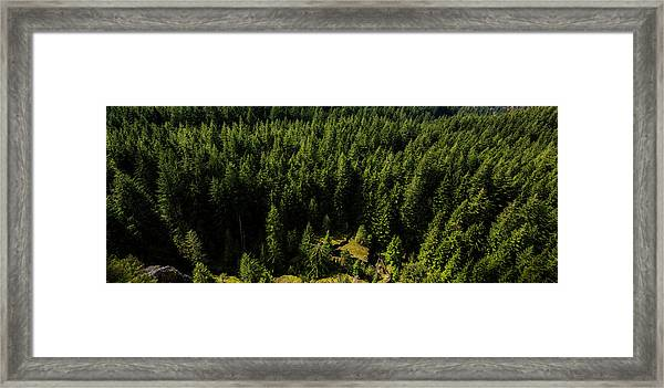 Cracked Rock In The Woods Framed Print