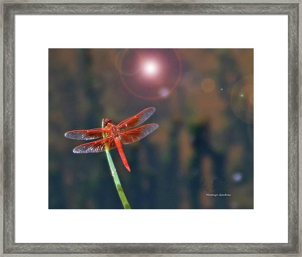 Crackerjack Dragonfly Framed Print