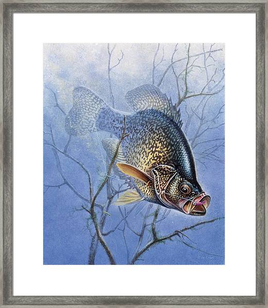 Crappie Cover Tangle Framed Print