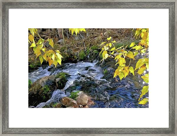 Creek And Aspen Leaves By Frank Lee Hawkins Framed Print