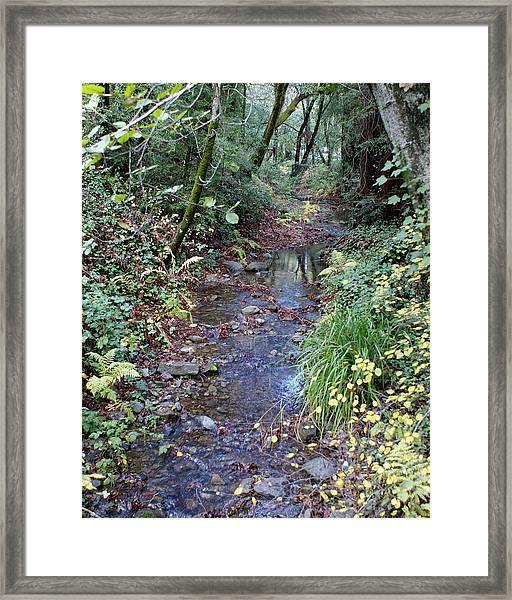 Creek On Mt Tamalpais 2 Framed Print