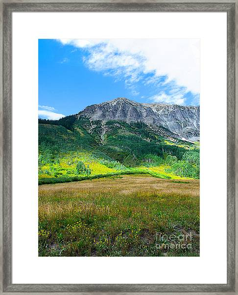 Crested Butte Aspens Framed Print