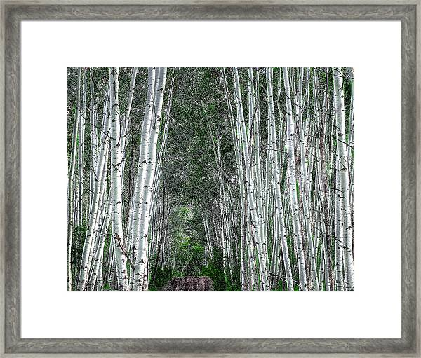 Framed Print featuring the photograph Crested Butte Stalwarts by Scott Cordell
