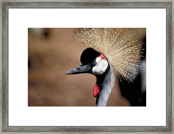The I Can't Believe It Bird Framed Print by Carl Purcell