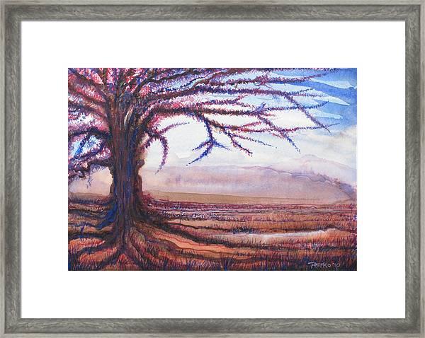 Criss Cross Tree Framed Print by Tom Hefko