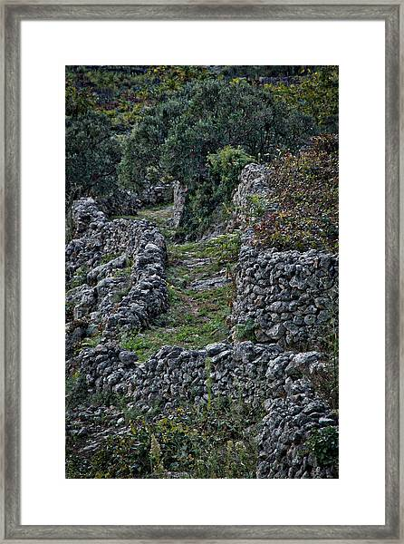 Croatian Vineyard Framed Print