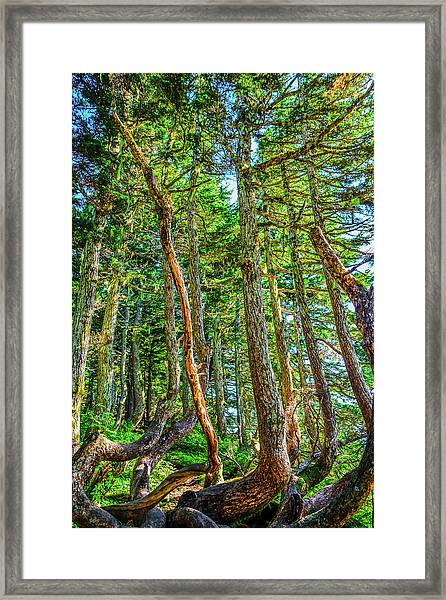 Crooked Trees Of Mt Roberts Framed Print