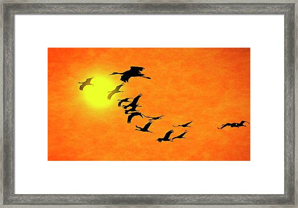 Crossing The Sun, Sandhill Cranes Framed Print