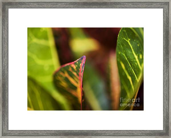Croton Leaf Macro I Framed Print