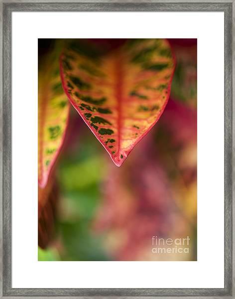 Croton Leaf Macro II Framed Print