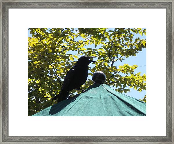 Crow On An Umbrella With Food Framed Print