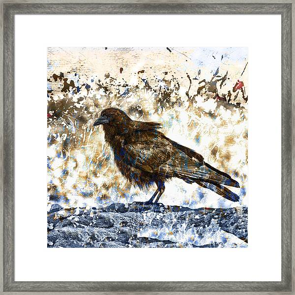 Crow On Blue Rocks Framed Print
