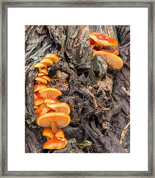 Crowded Living Framed Print