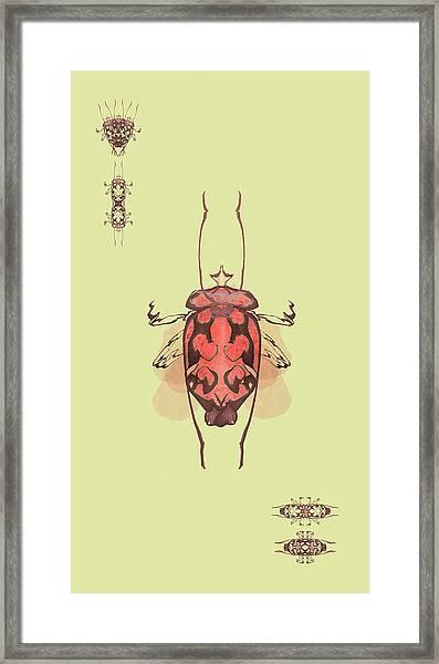 Crowned Horn Bug Specimen Framed Print