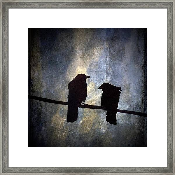 Crows And Sky Reflections Framed Print