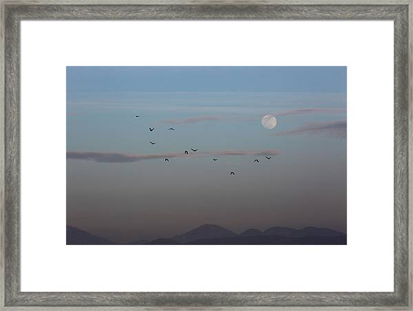 Crows Coming Home To Roost Framed Print by Robin Street-Morris
