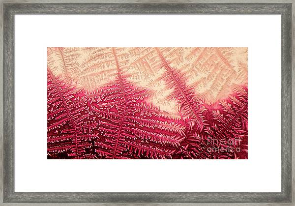 Crystal Of Ammonium Chloride Framed Print