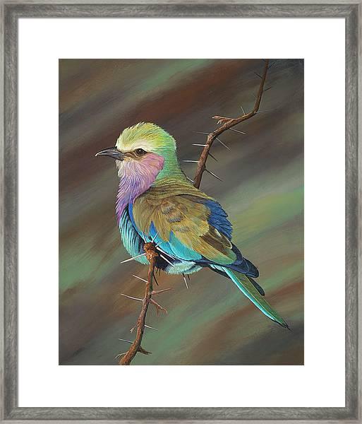 Crystal's Bird Framed Print