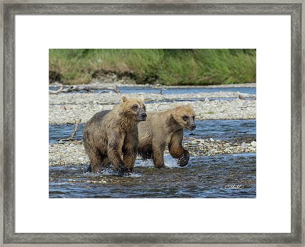 Cubs On The Prowl Framed Print