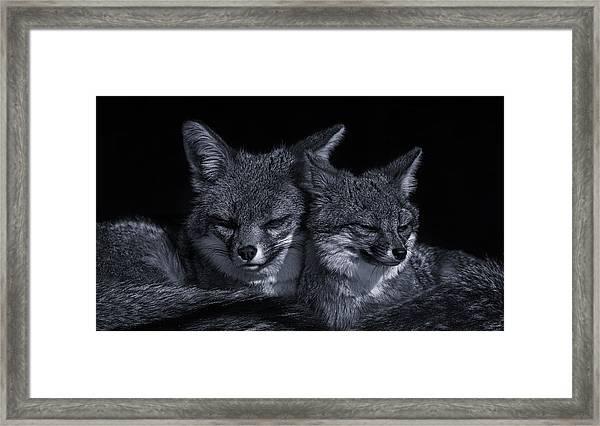 Cuddle Buddies  Framed Print