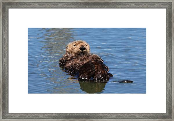 Cuddle Bunches  Framed Print
