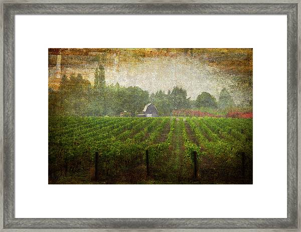Cultivating A Chardonnay Framed Print